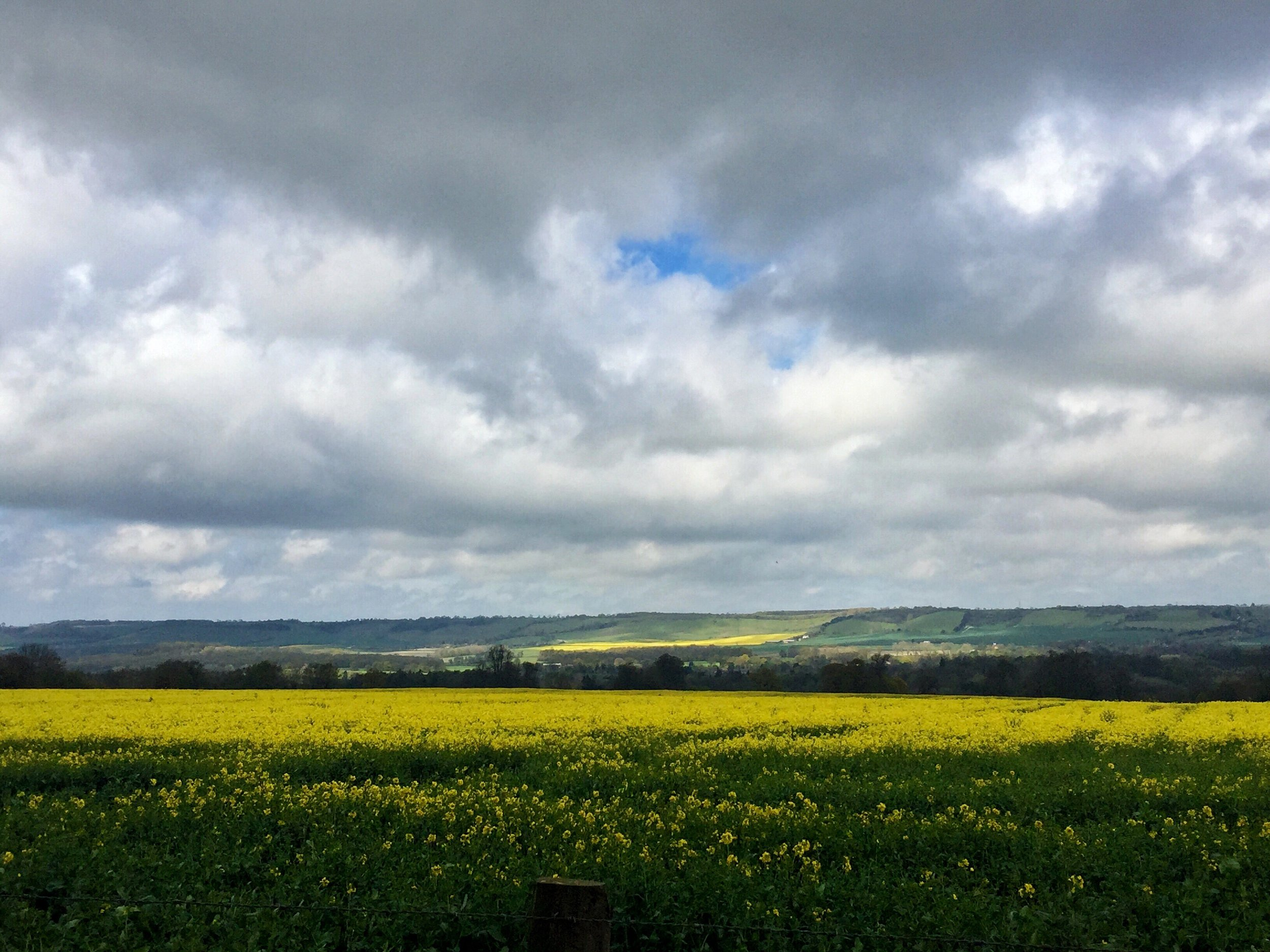 Rolling hills and rapeseed fields in the countryside