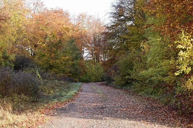 Pheasants Autumn