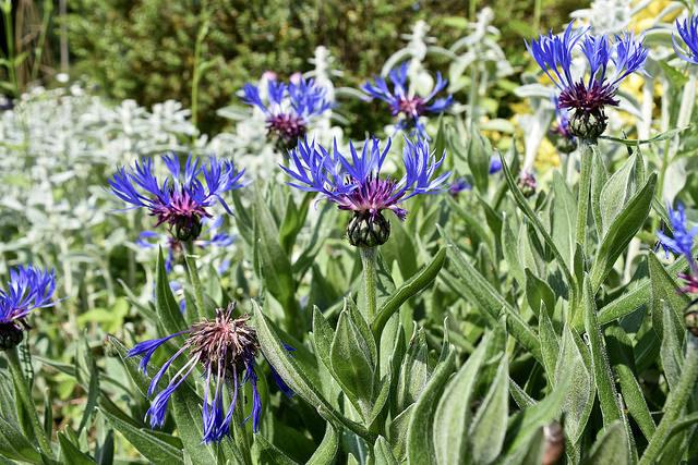 Cotswolds flowers.jpg