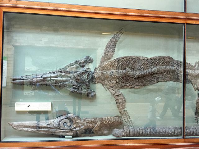 Jurassic Coast fossils at London's Natural History Museum