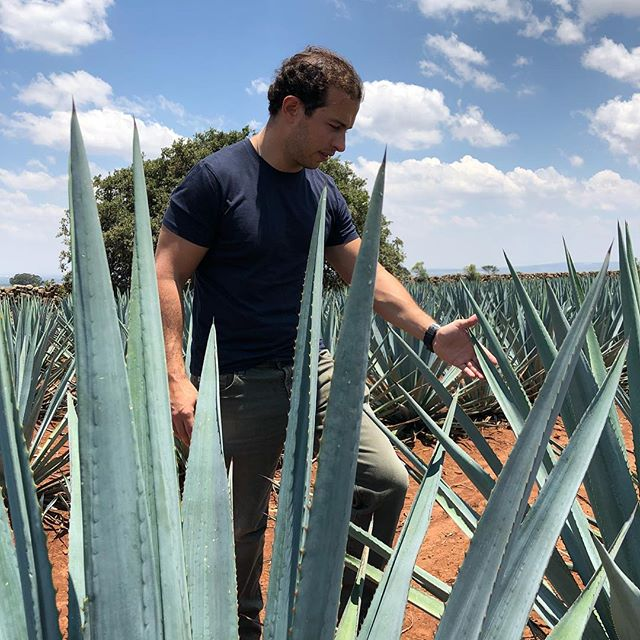Our Maestro Tequilero Guillermo Barroso supervising the agave fields in the highlands of Jalisco. #microbatch #luxuryspirits #elpintor . . #tequila #mezcal #tequilajoven #foodie #mixology #crafttequila #craftspirits #luxurylifestyle #salud #foodie