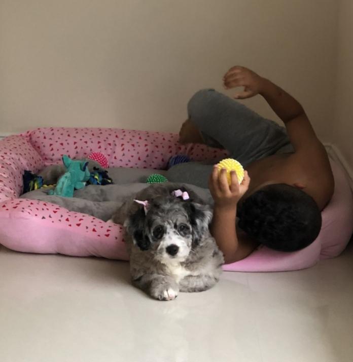 Dolly now Maze has found her forever home with Adriana Deitado from FL