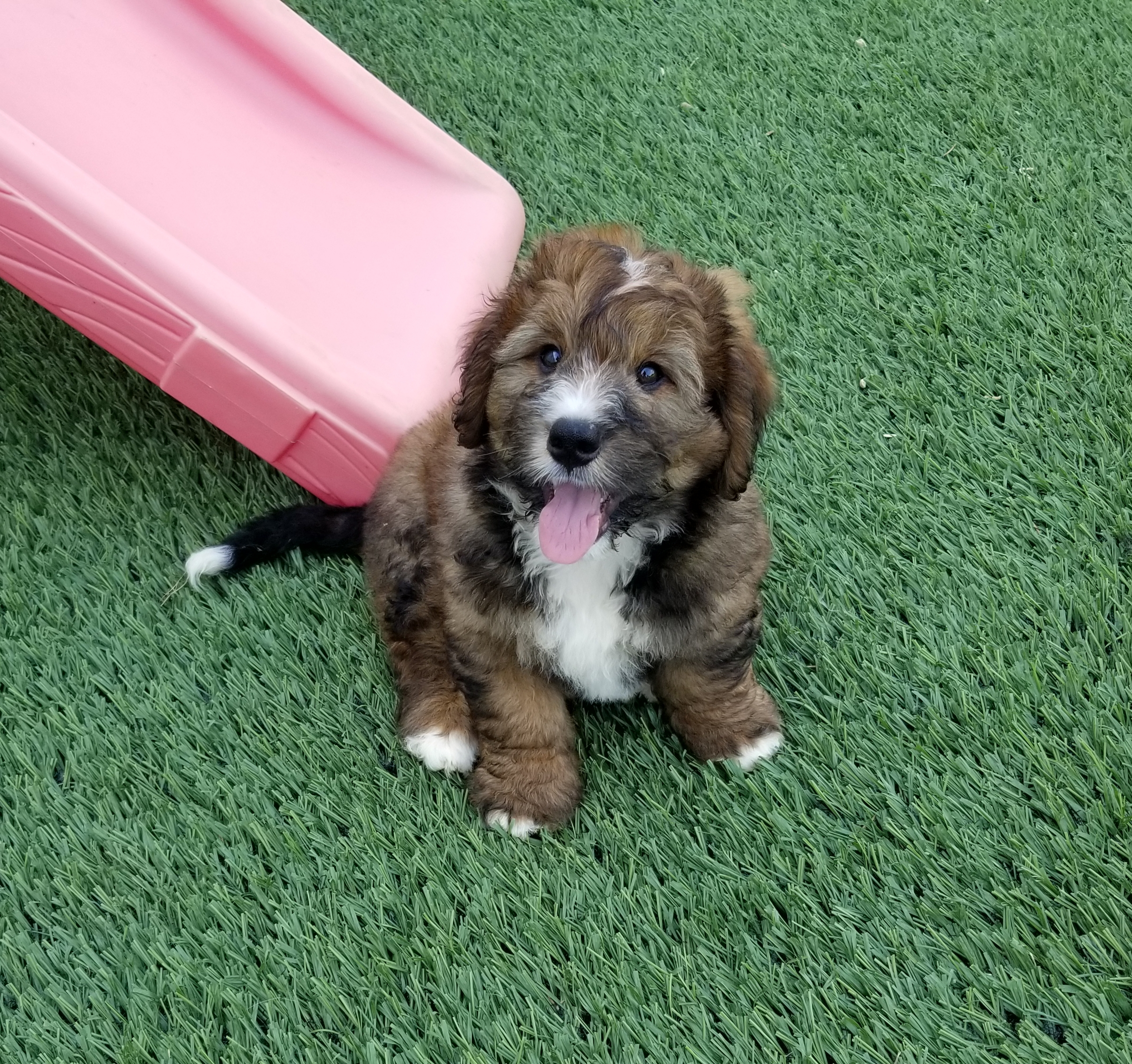 Chewie formerly Ike is living with Ben Dukleth and family in Texas.