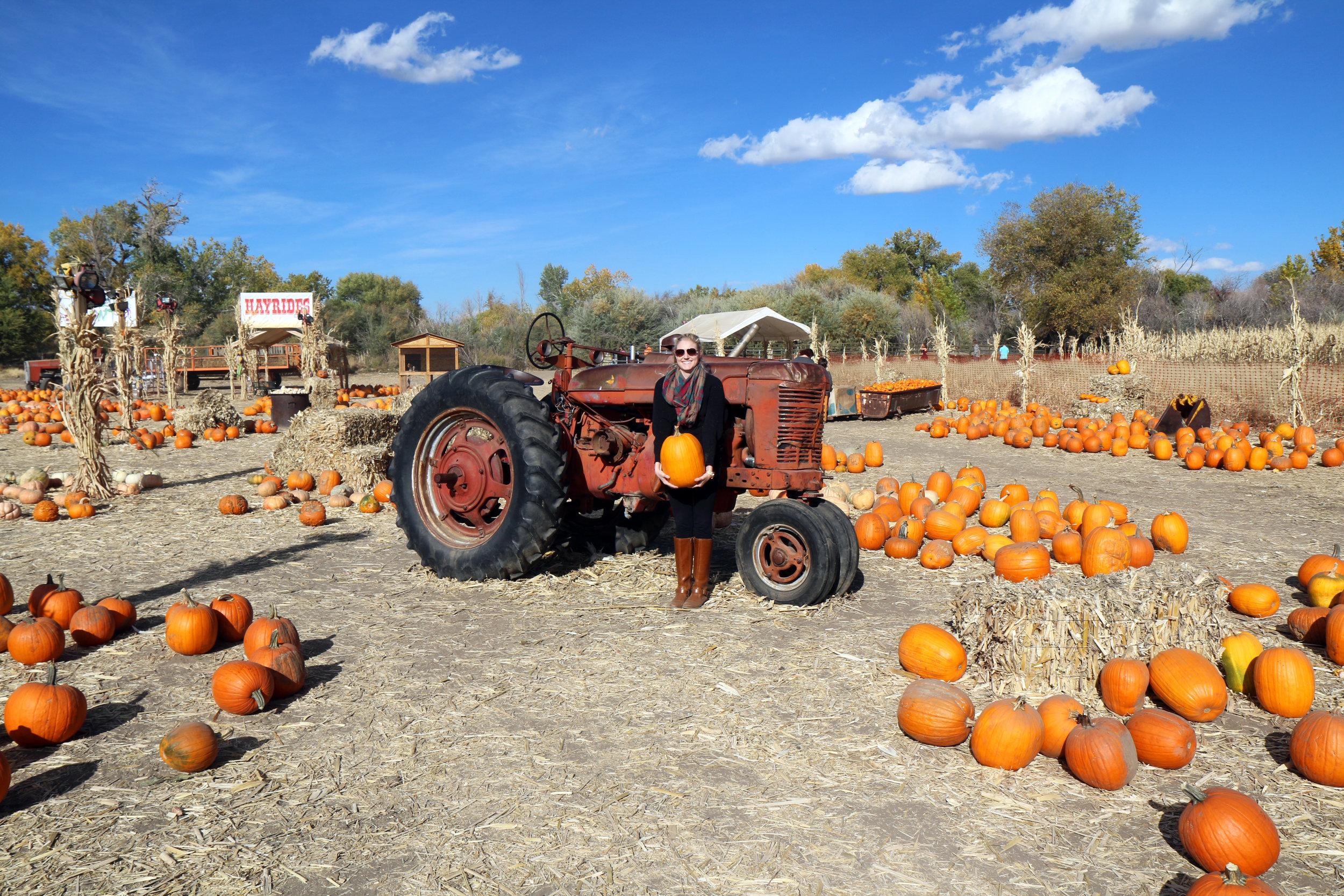 Ferrari Farms Pumpkin Patch in Reno, Nevada. A MUST visit in the fall.