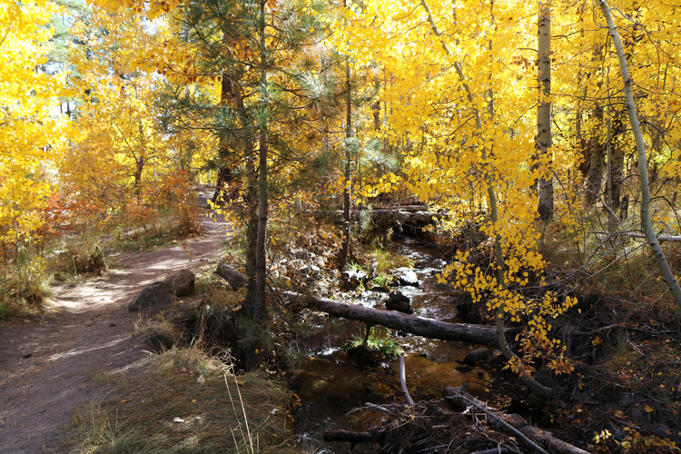 The BEST trails in Nevada. Dry Pond Hike   6.8 miles near Reno, Nevada