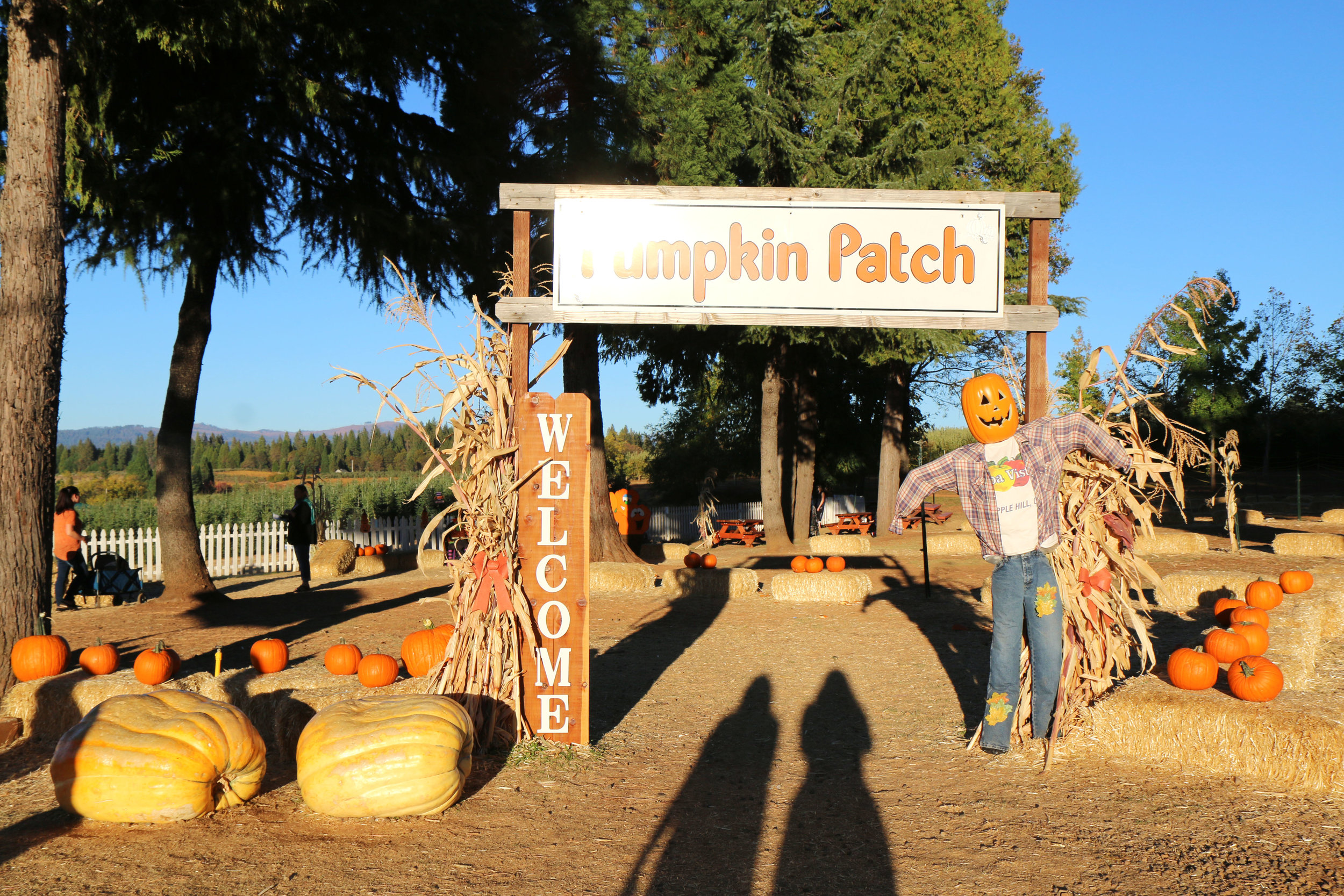 Apple Hill Growers & Farms in California. The ultimate guide to Apple Hill farms; where to go, what to eat.