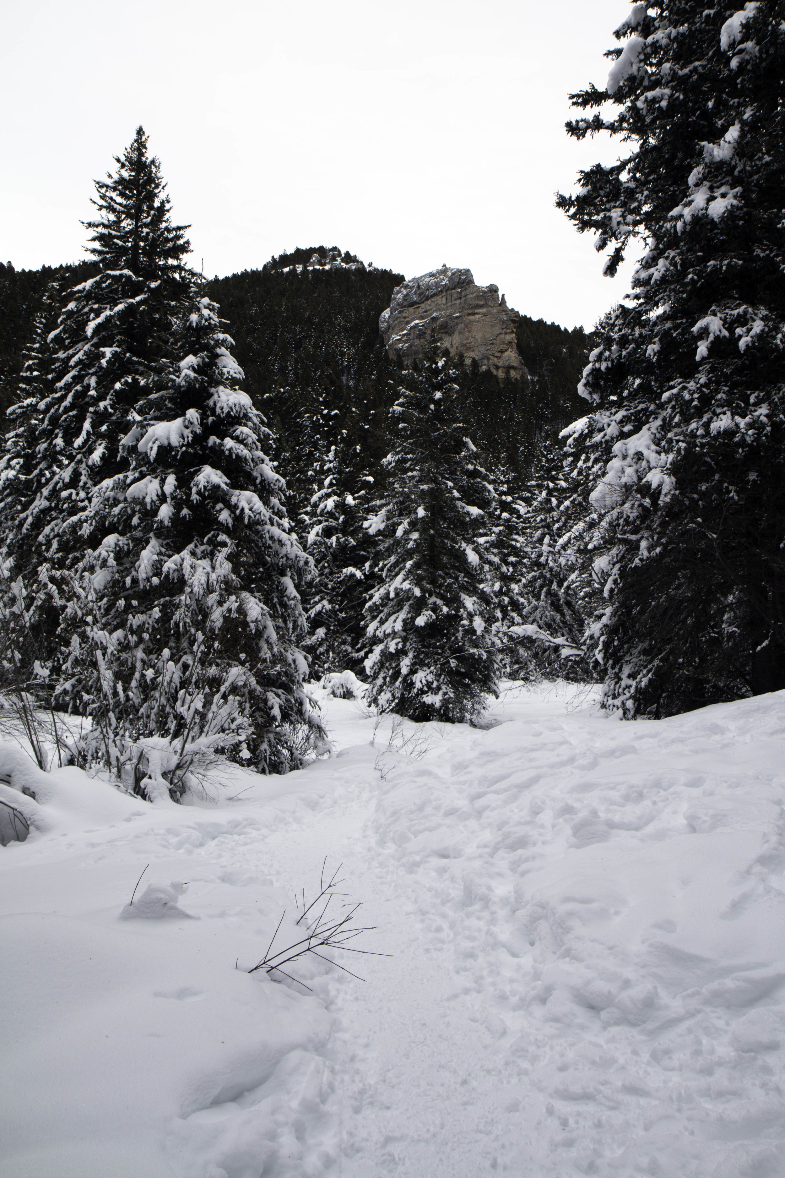 Things to do in the winter near Bozeman, MT - South Cottonwood Creek Trail