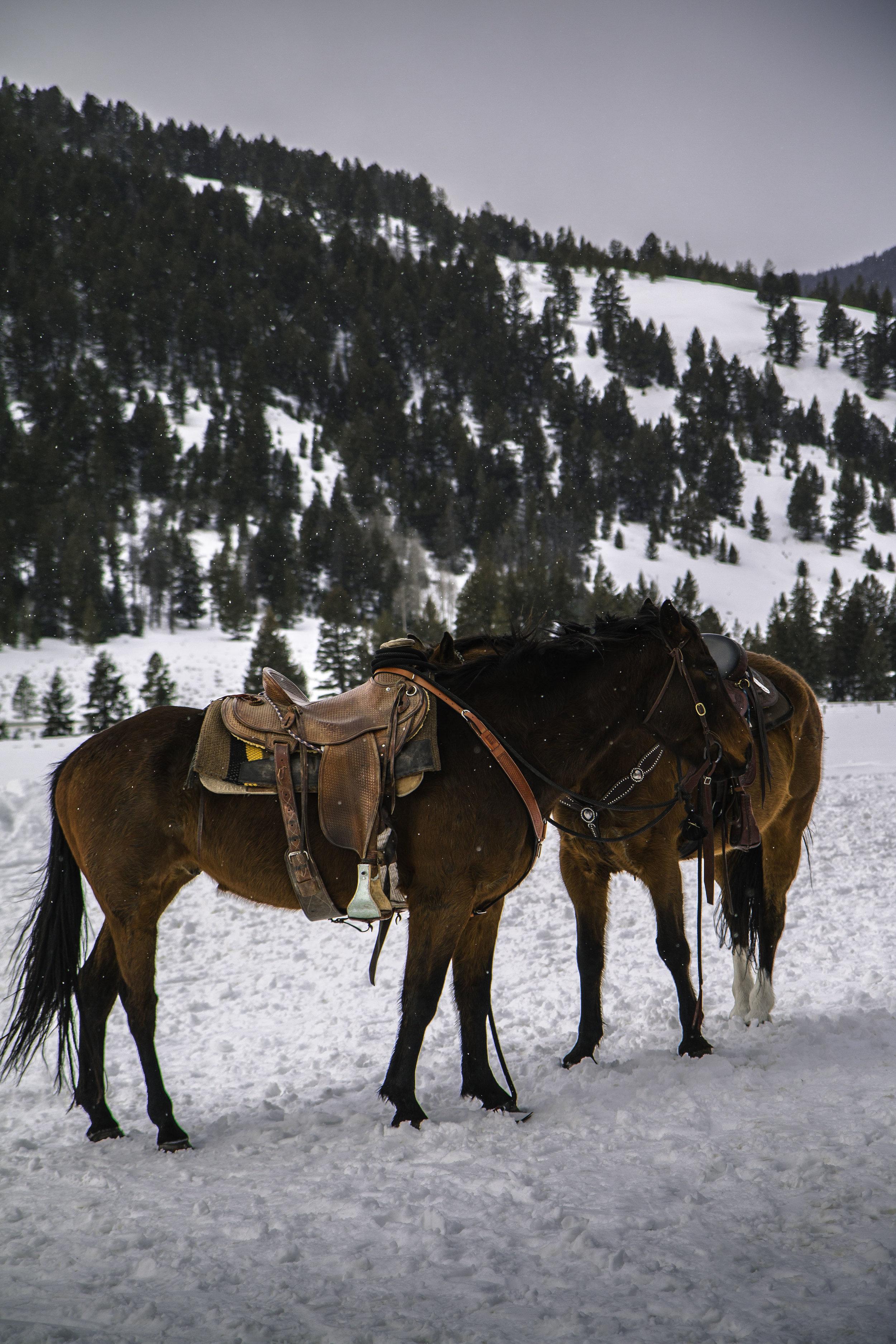Beautiful horses in Montana