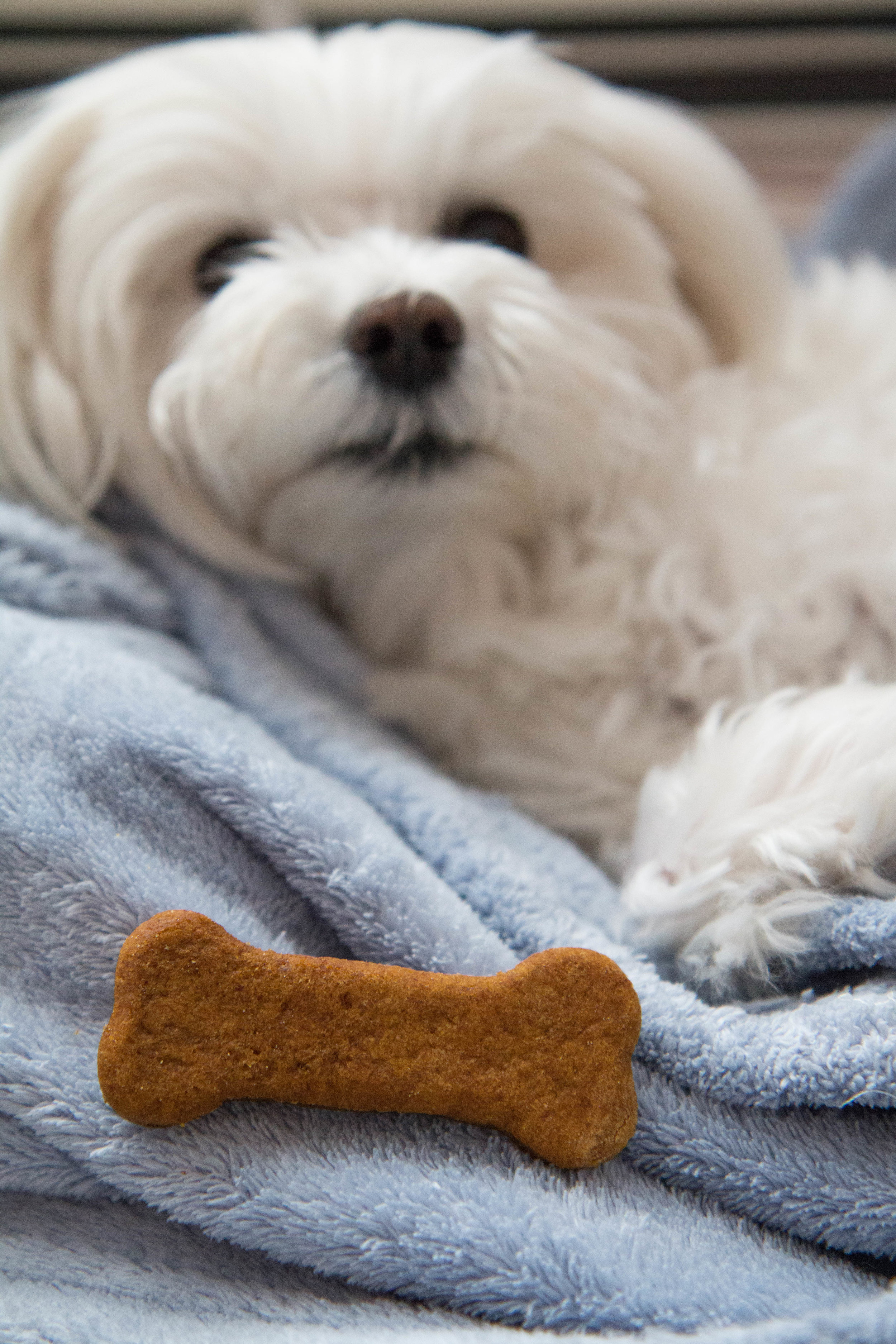 Delicious and healthy homemade dog treats made with pumpkin and peanut butter.