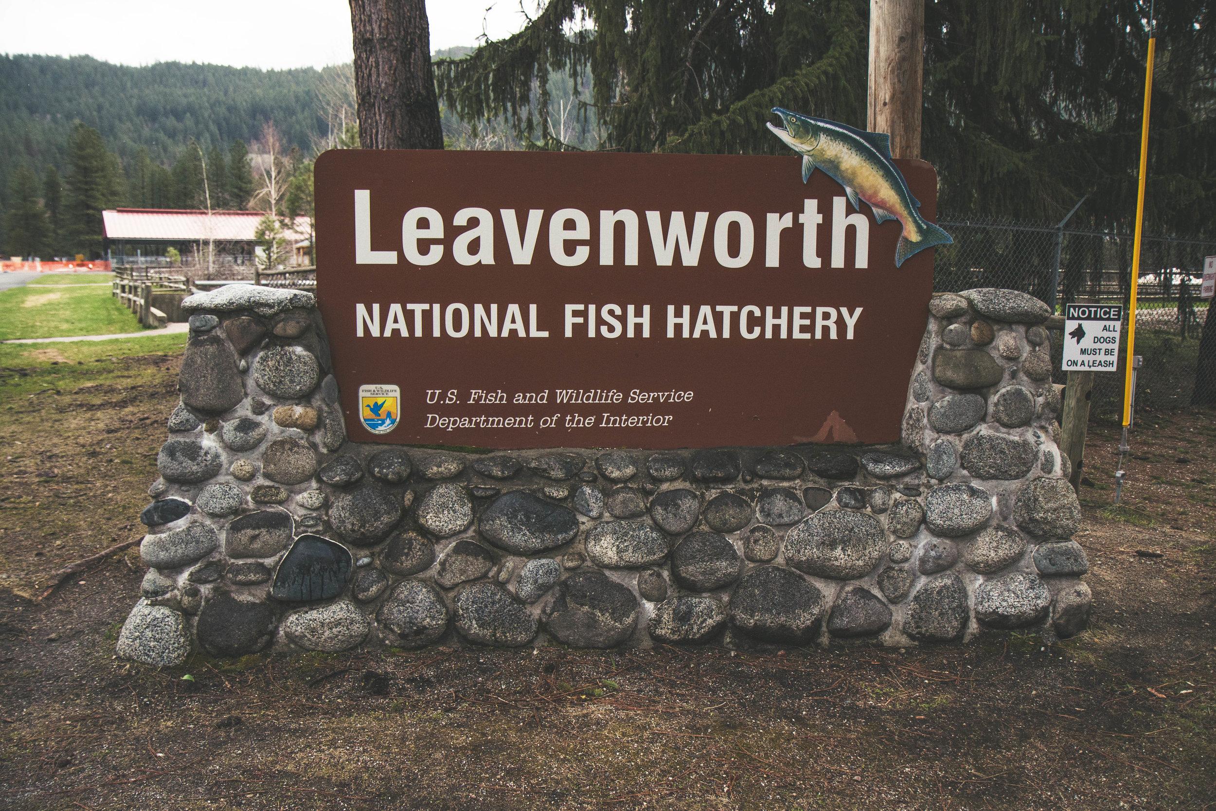 The National Fish Hatchery in Leavenworth, Washington.