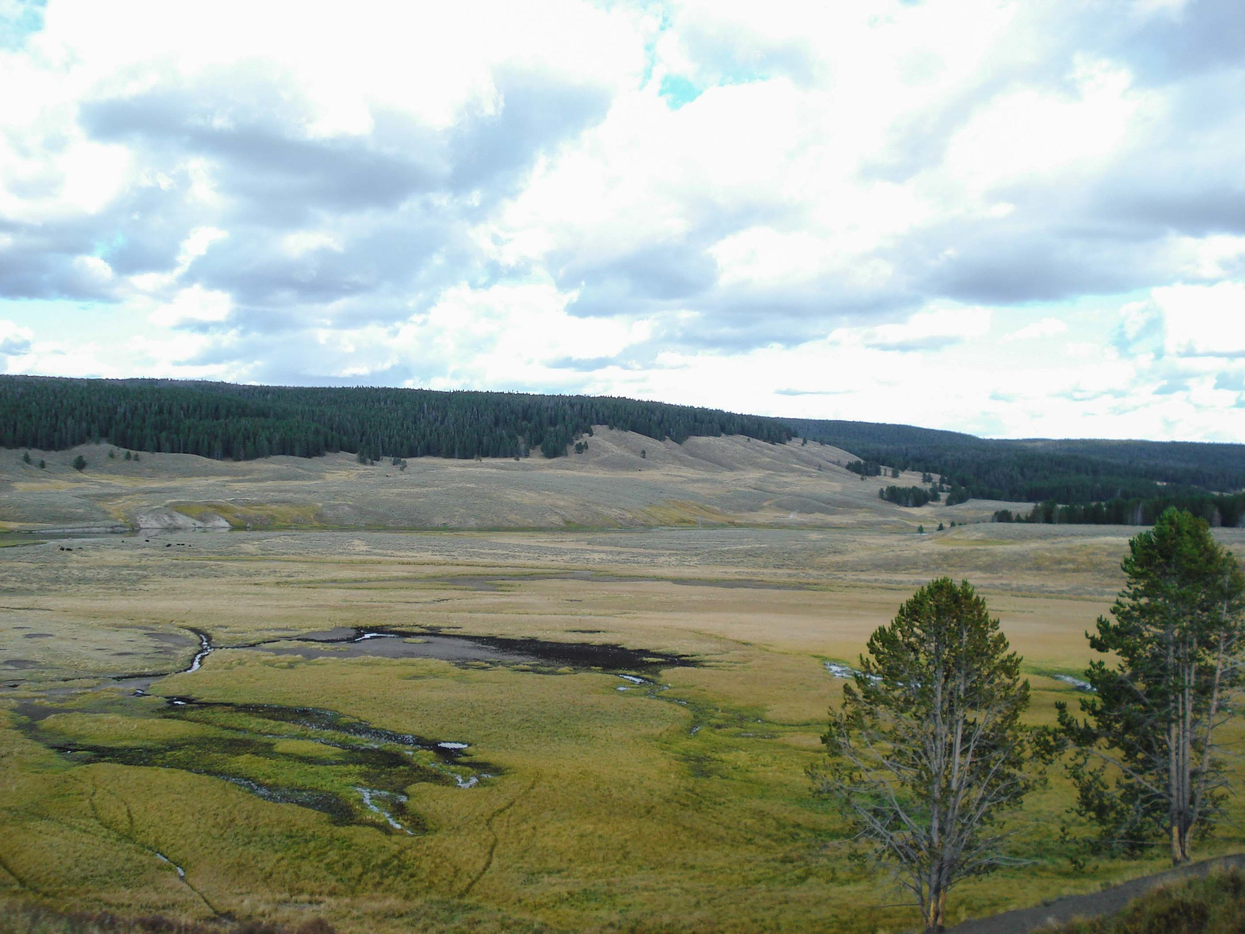 Lamar Valley | The Ultimate Travel Guide for Yellowstone National Park by Travel + Lifestyle blogger Bri Sul