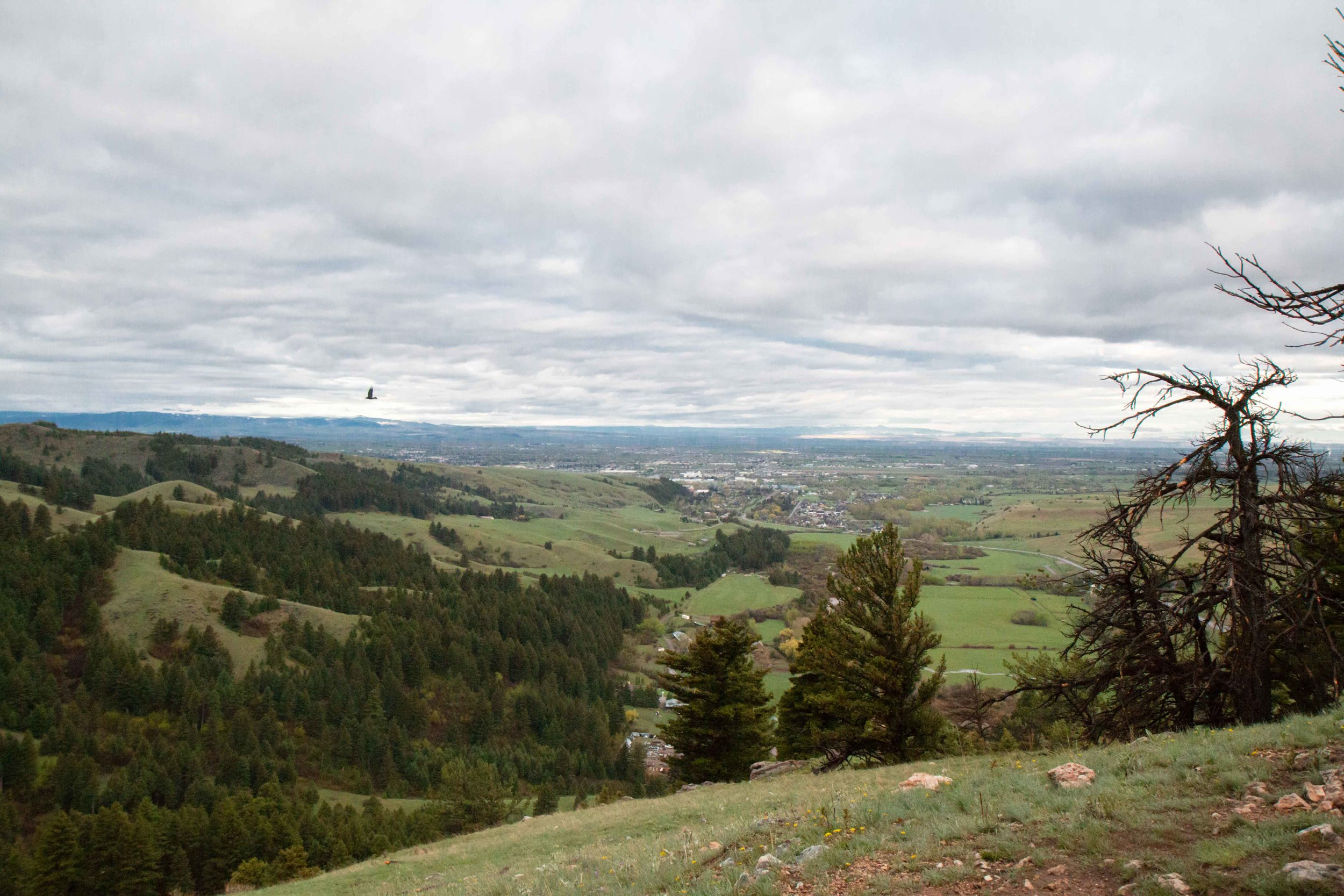 Drinking Horse Mountain Trail near Bozeman, Montana. A beautiful and easy hike that is great for the whole family.