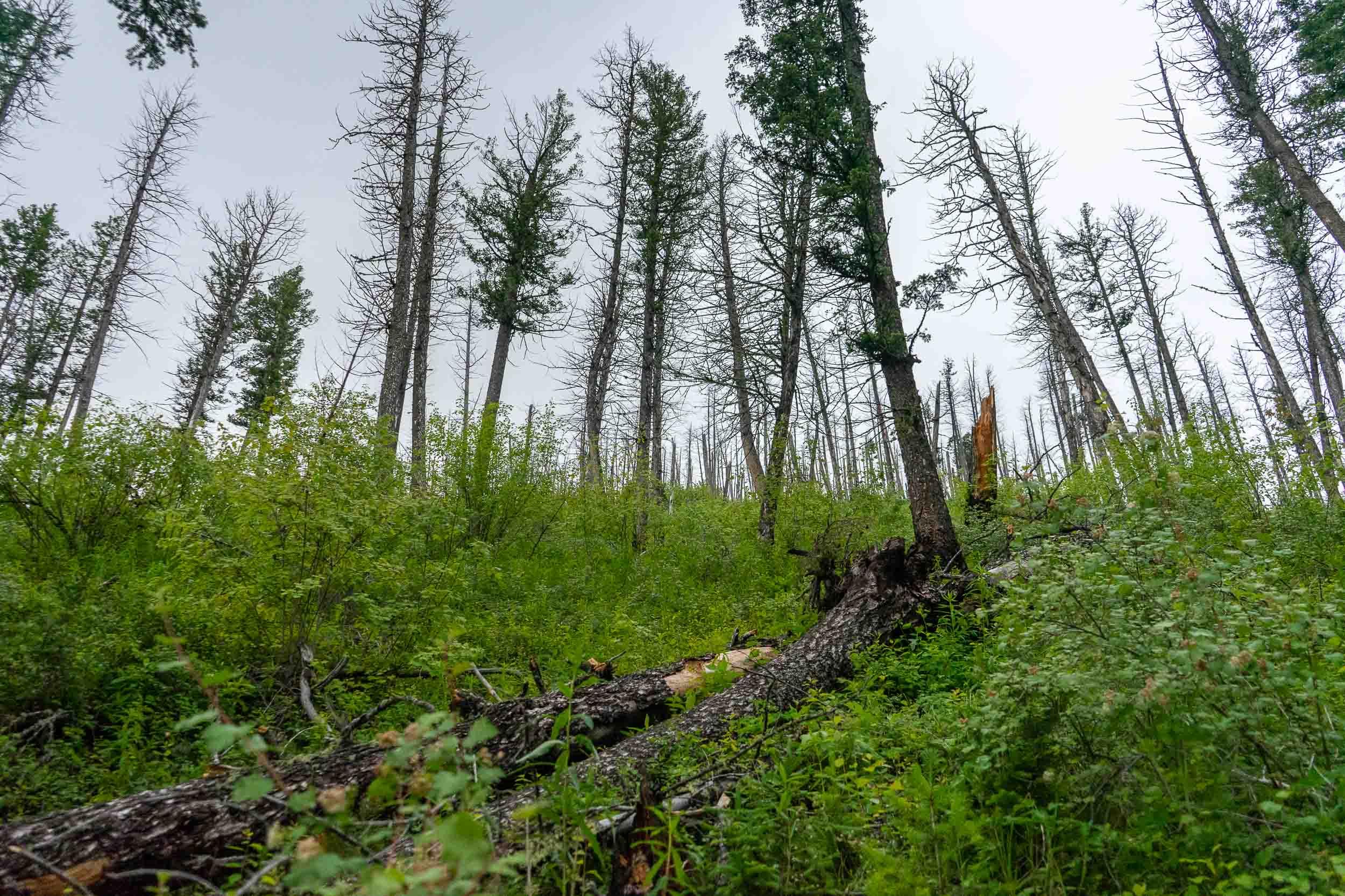 Deer Creek Cabin forest service cabin near Big Timber, Montana