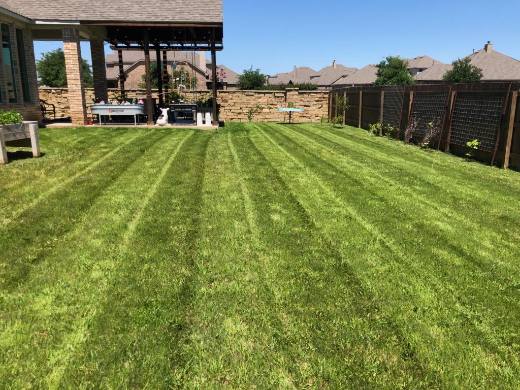 Stipe Grass.jpg