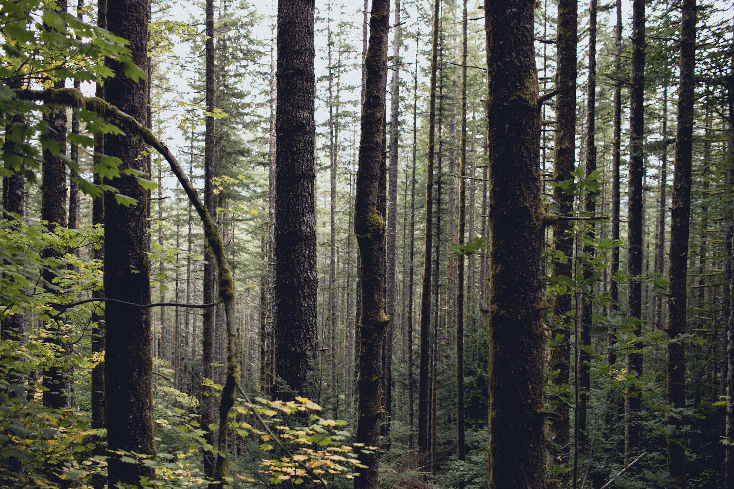 cascade mountain forest