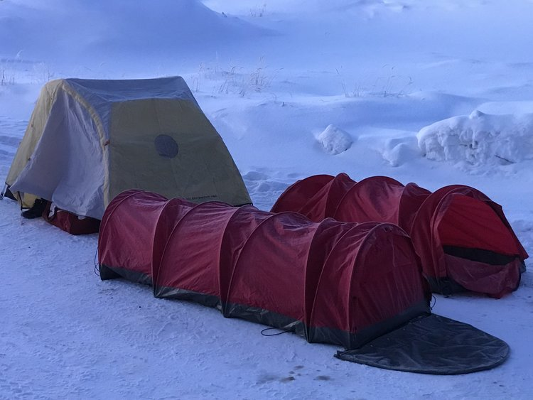 caterpillar tents