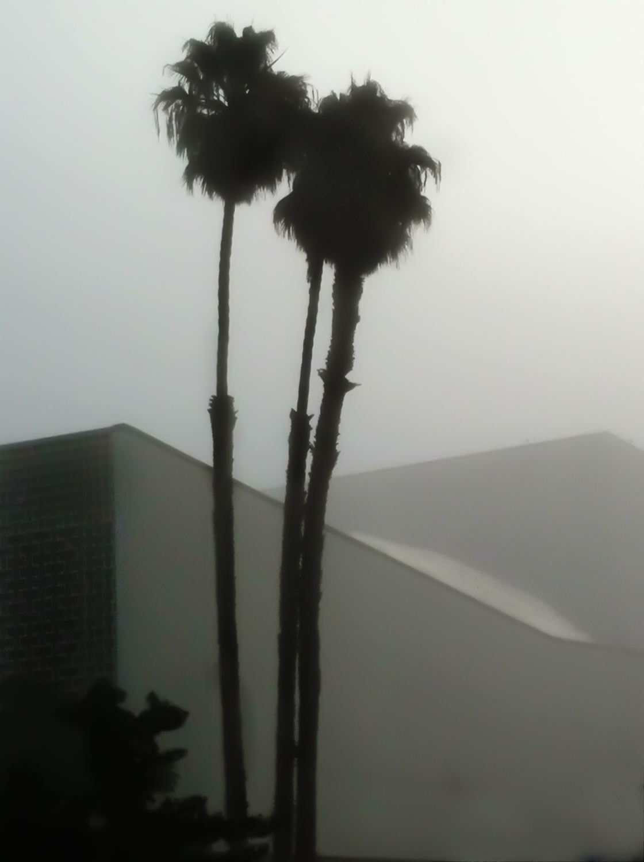 A Foggy Morning In Santa Monica, 2011-6.jpg