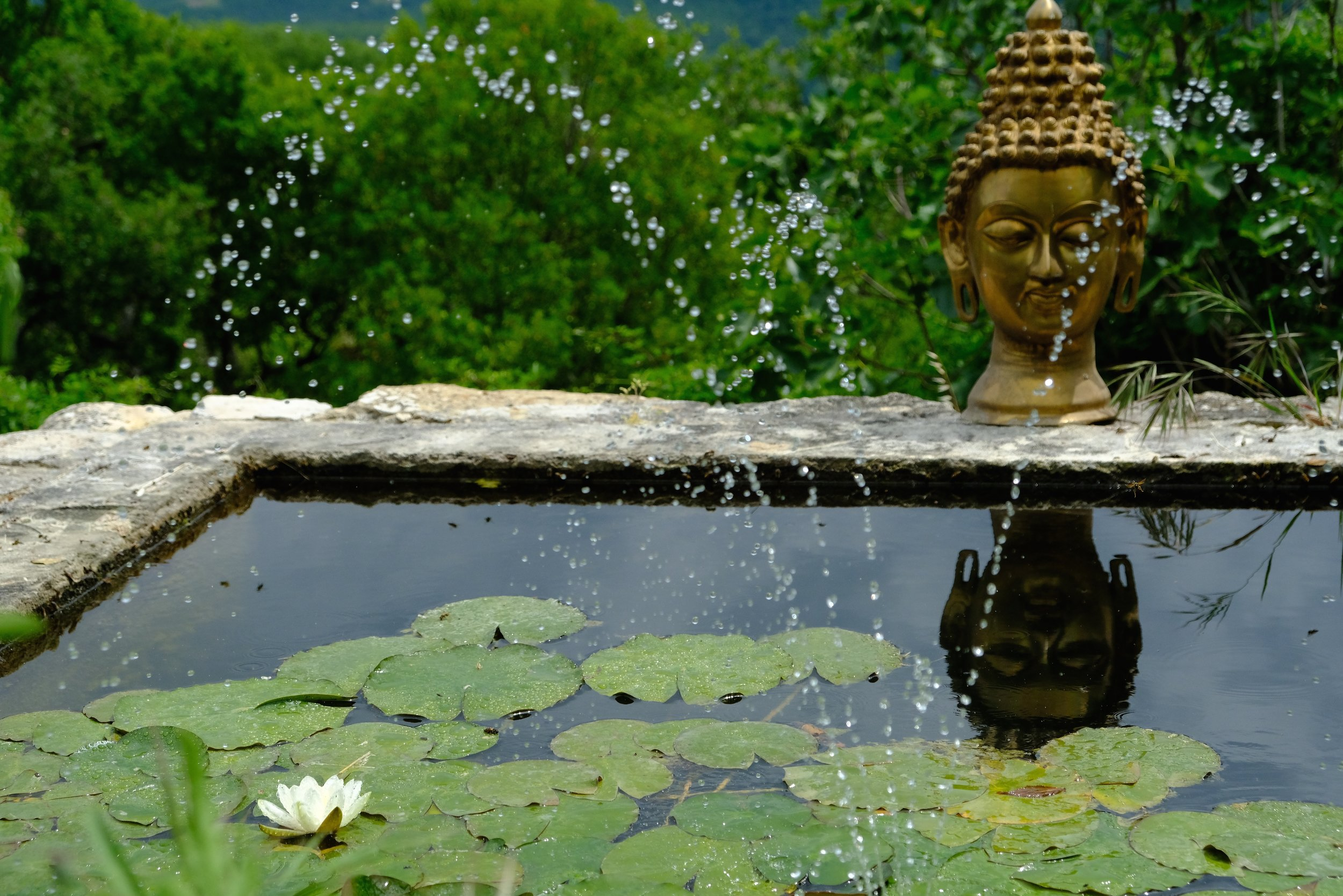 Buddha unperturbed by the bees. They fly around him all day. Some of their reflections are visible in the water.