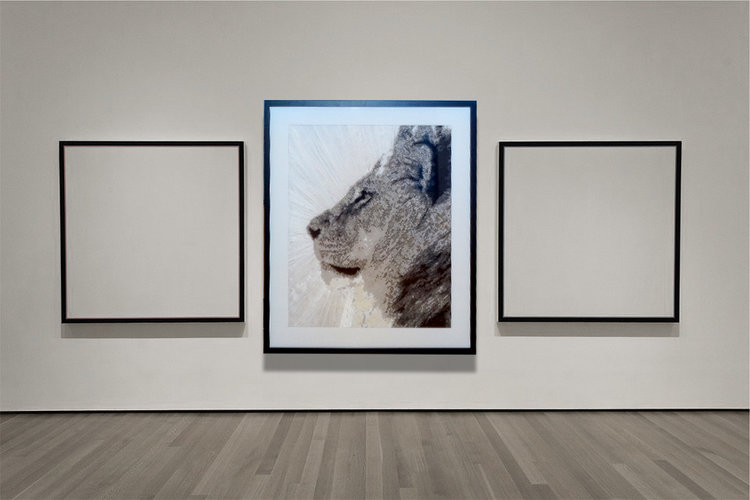 lionrad_gallery2.jpg