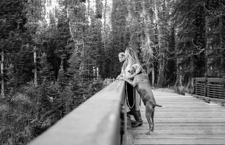 weimaraner, bridge, Griffith woods, family photographer,