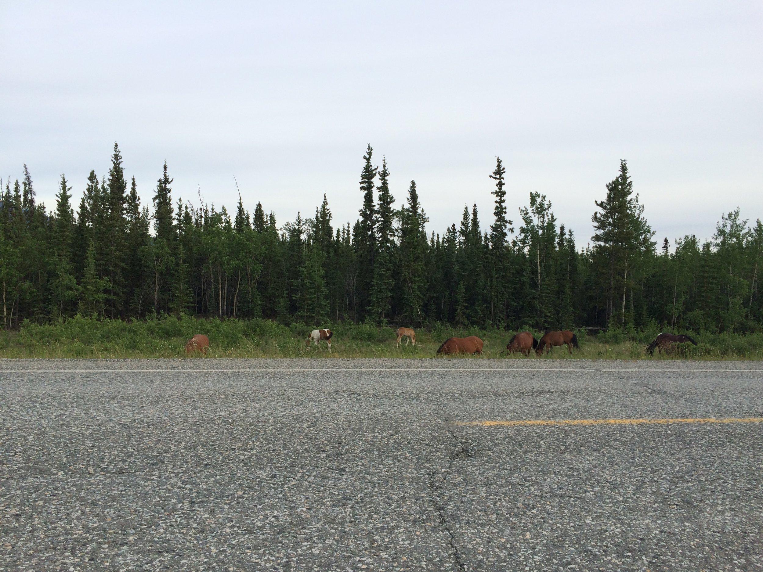 IMG_1586 wild horses.JPG