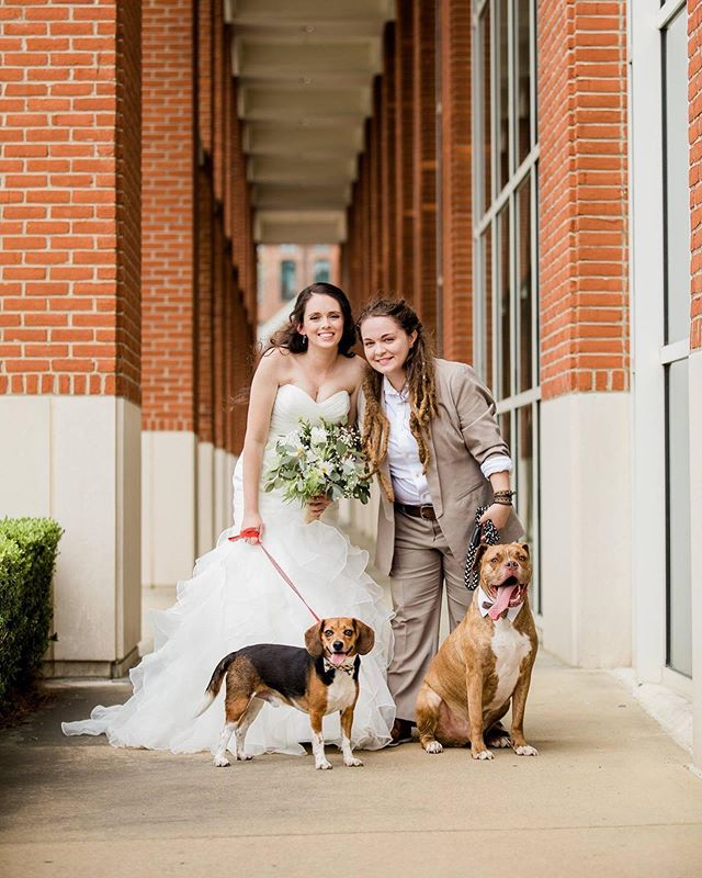 Say it with me: P U P P I E S . . . . . #columbusgaphotographer #columbusgaweddings #columbusga #wedding #weddings #theknot #southernweddings #lgbt #loveisloveislove #puppies #boxer #pitbull #pibble #synovuspark #colga #beagle #beaglet