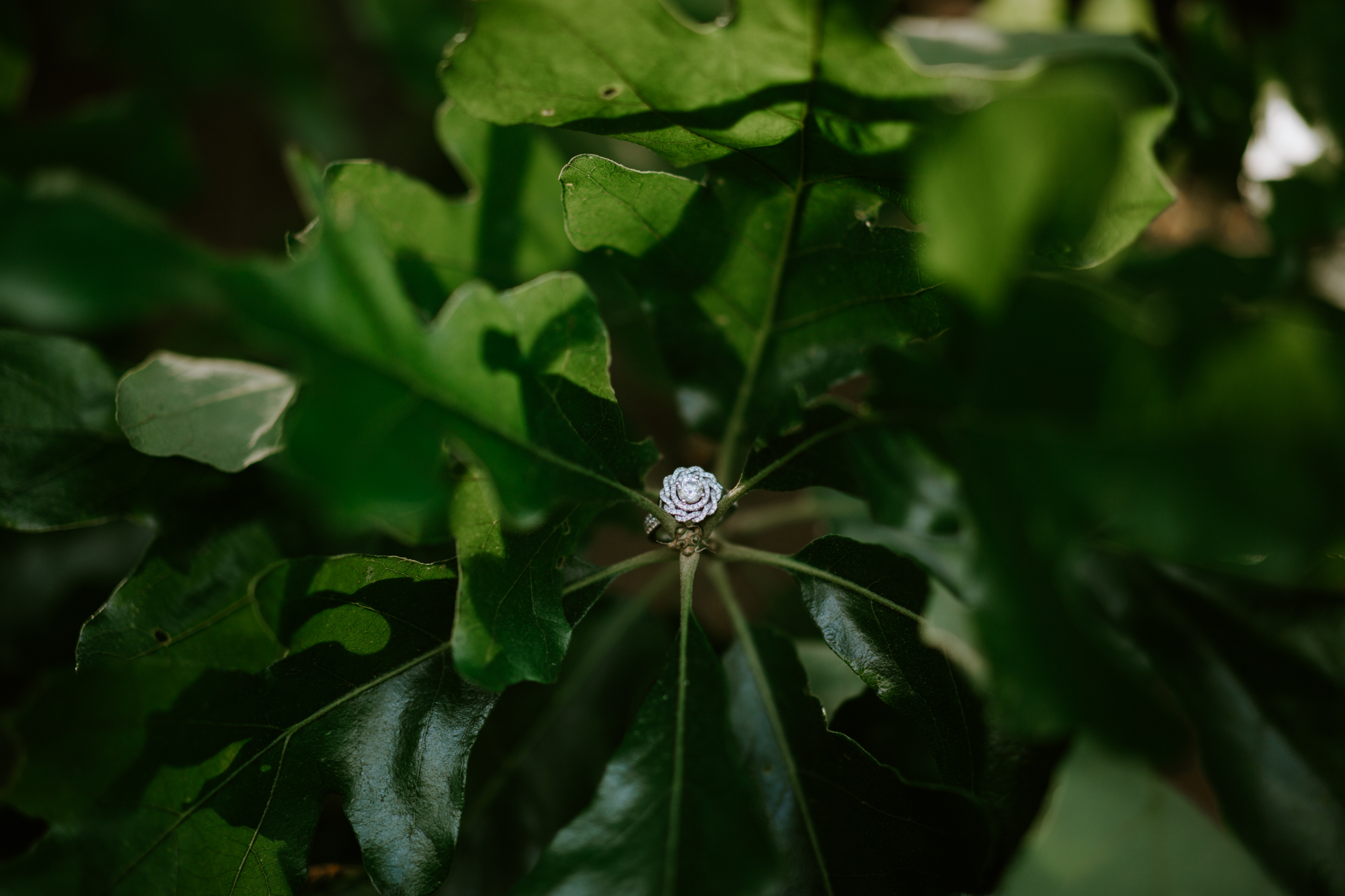 Courtney-Jordan-Chattanooga-Nashville-Tennessee-Wedding-Elopement-Photographer-72.jpg