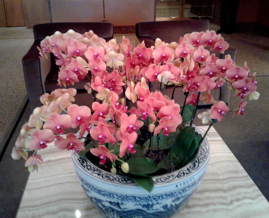 161_orchid1.jpg