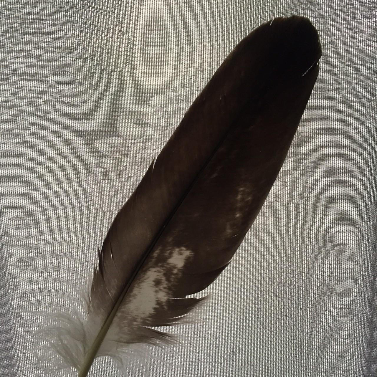 eagle feather.jpg