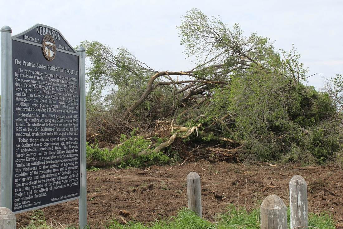 Historic marker at the Schleusener Farm (now removed) next to the cleared trees (photo courtesy of the  theoddessyonline.com )
