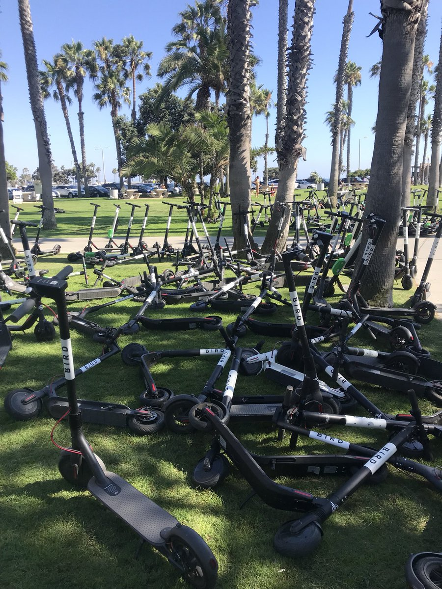 An alarming number of Bird scooters in a Santa Monica park (photo courtesy of @mdeskind)