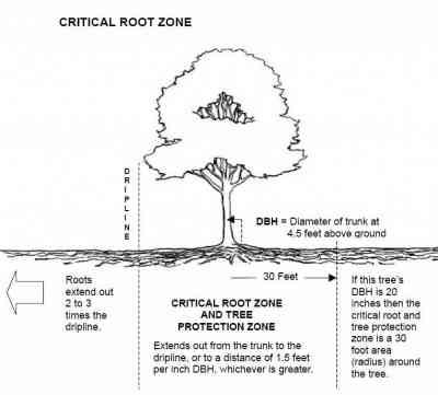 Shadywood Tree Experts - tree watering zone