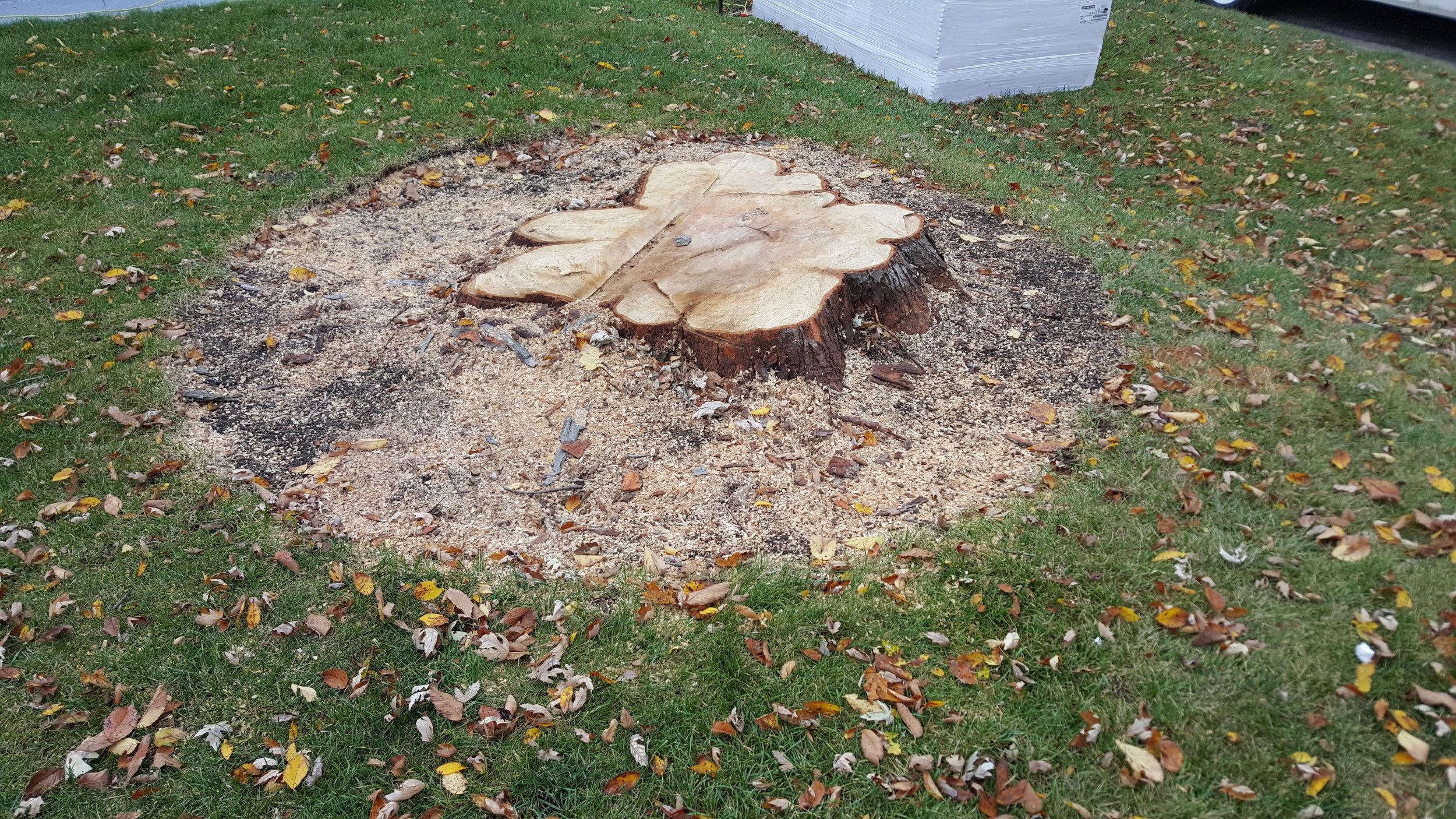 Shadywood Tree Experts - stump grinding