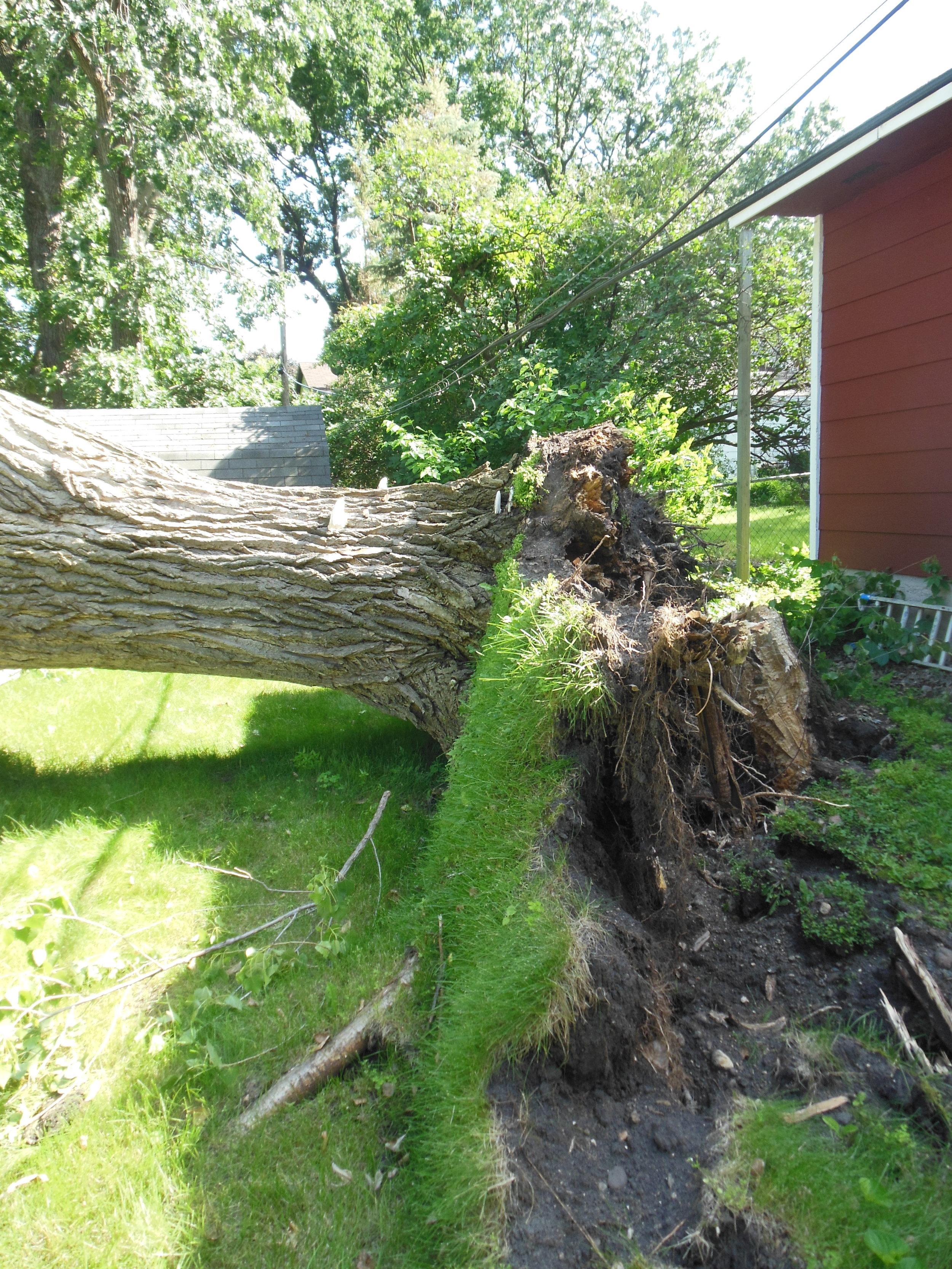 Shadywood Tree Experts