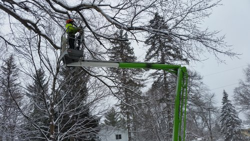 services-Winter-tree-trimming.jpg