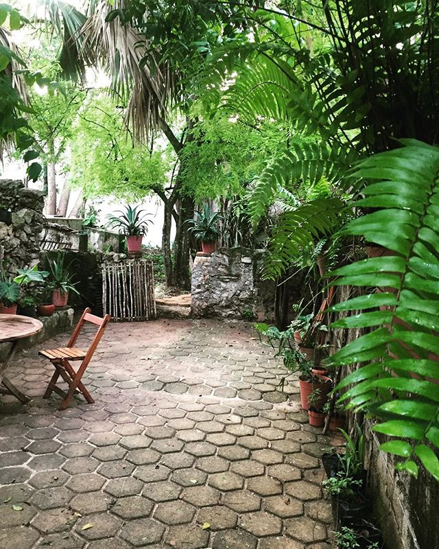 Buenos días jardín. Watering the plants before the heat #artstudio #colonialmexico #southwindprojects #alkibotanica #vegan #veganfood #greenliving #alchemy #organicrevolution #nodiary #nodiaryproducts #meatfree #bleucheese #vegancheese #quesovegano #quesoveganocasero #healthylifestyle #southwindprojects #plantmedicine #ancestralmedicine #ethnobotany #nativeamerican #organicrevolution #sustainable #limitededitions #printmaking
