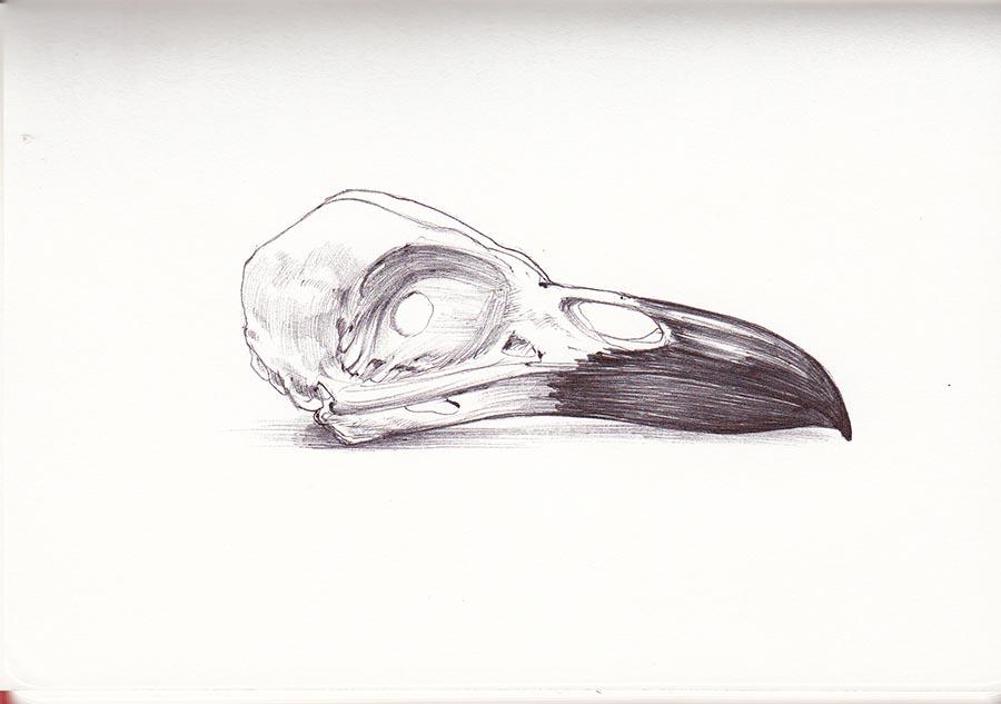 Raven Skull/Ballpoint