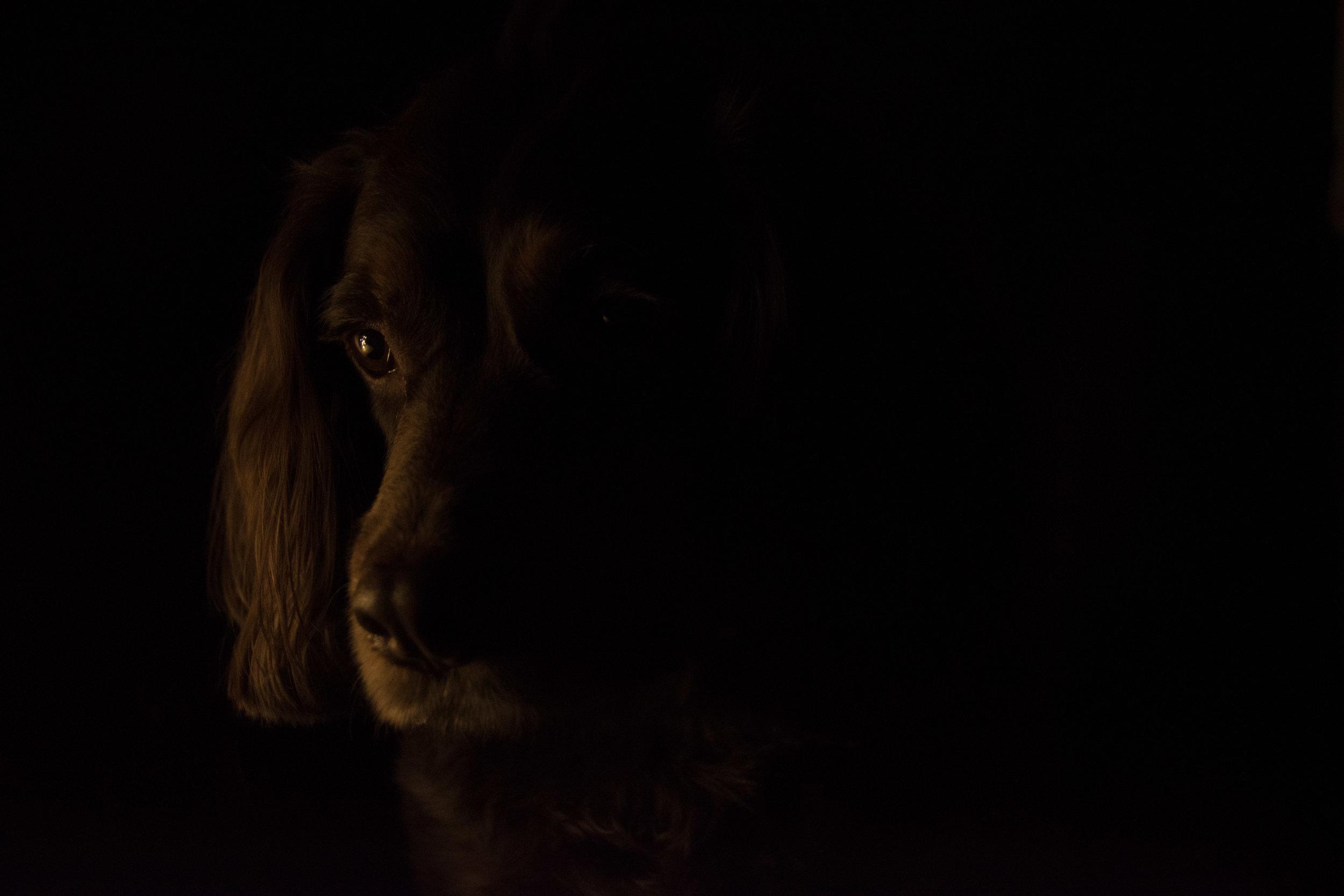 Cheshire dog photographer, Lancashire dog photographer, unique dog photographer, artistic pet photographer, Pet photographer, pet portrait