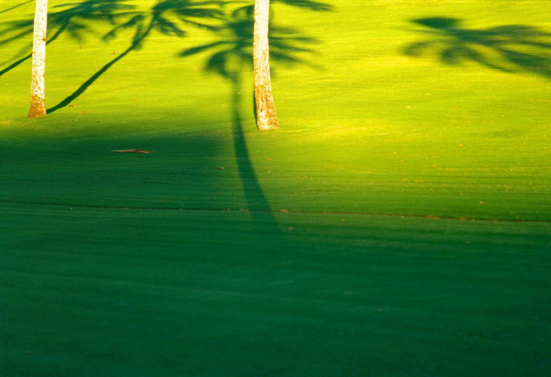 palmshadows on meadow   kaanapali /maui / hawaii   buy here