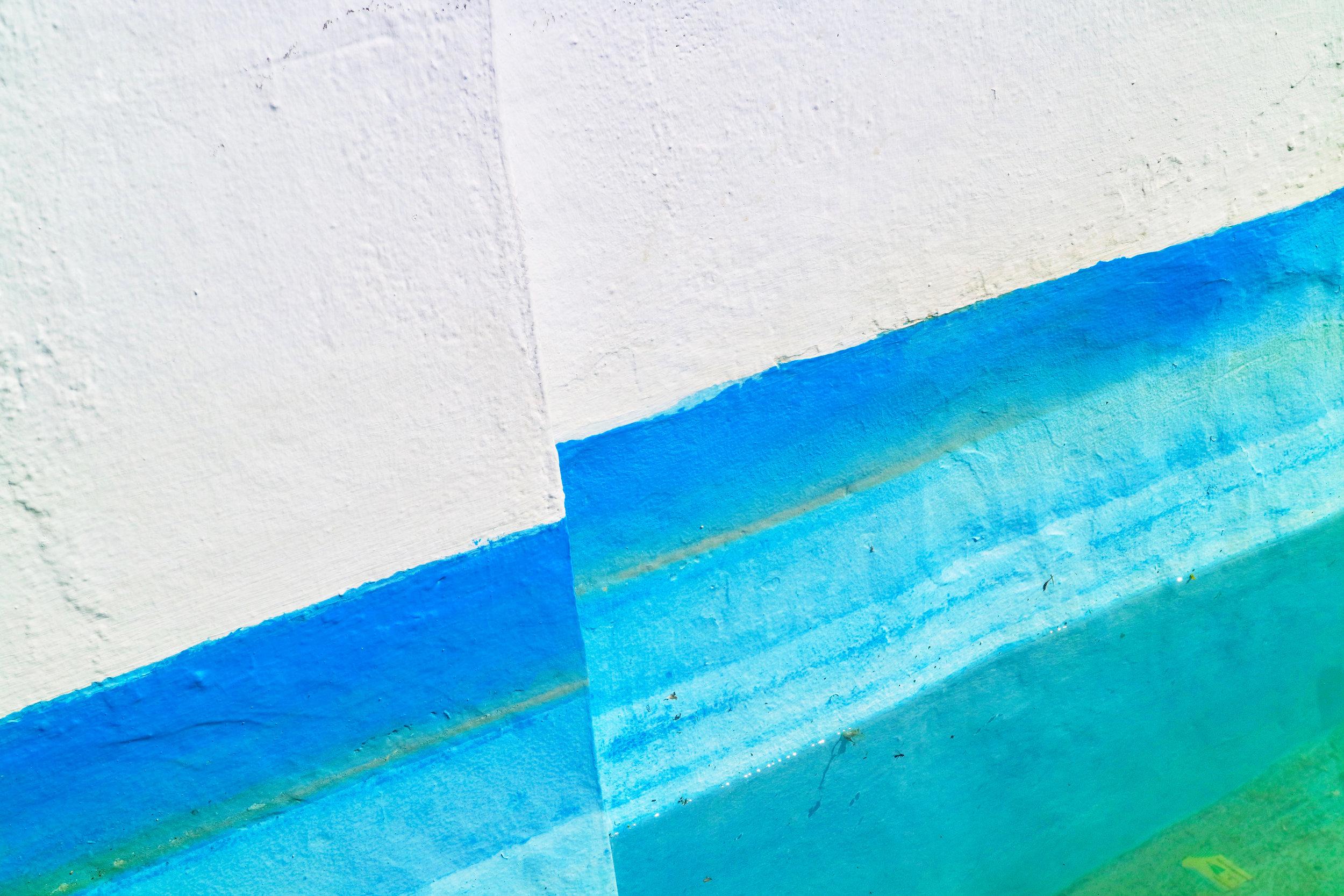 azules en la fuente de las galeras  el puerto de santa maría / andalucía