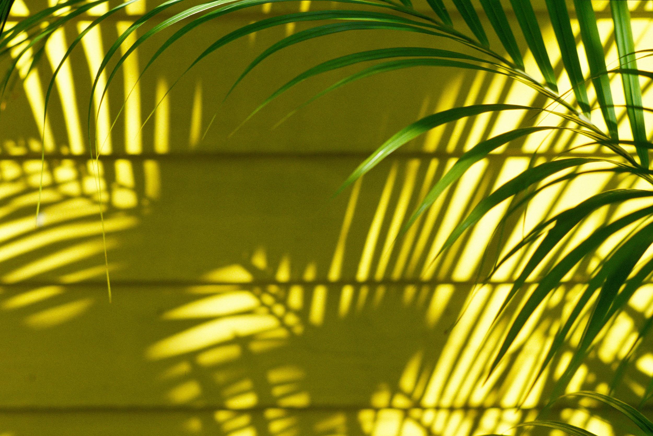 key west palm shadow  key west / florida