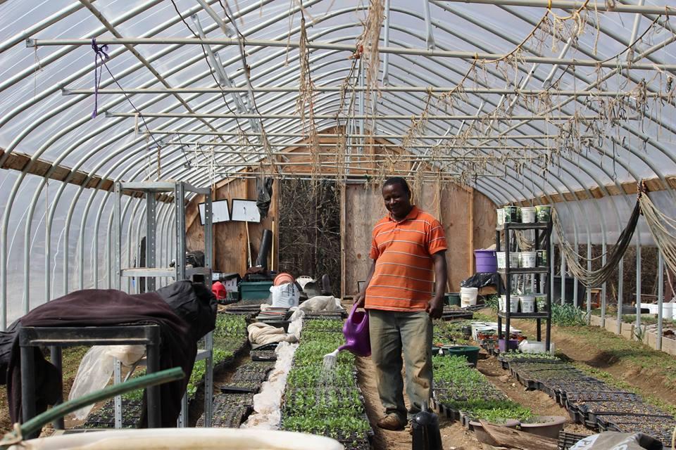 Yussuf seedlings.jpg