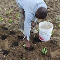 Sidi planting.jpg