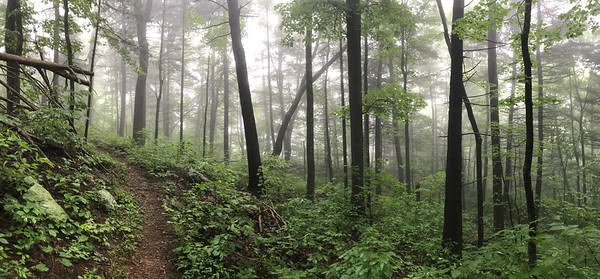 trails3.jpg