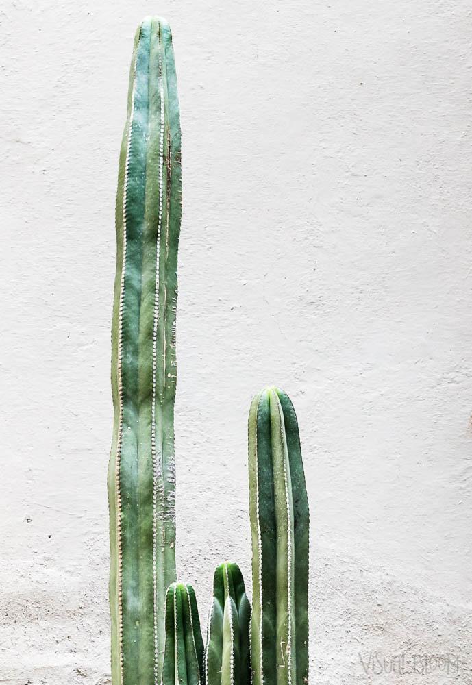 cactus-Monica-Duran.jpg