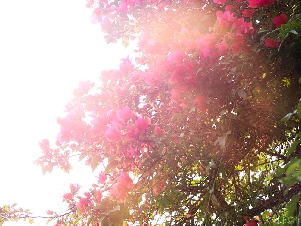 flores-Monica-Duran.jpg
