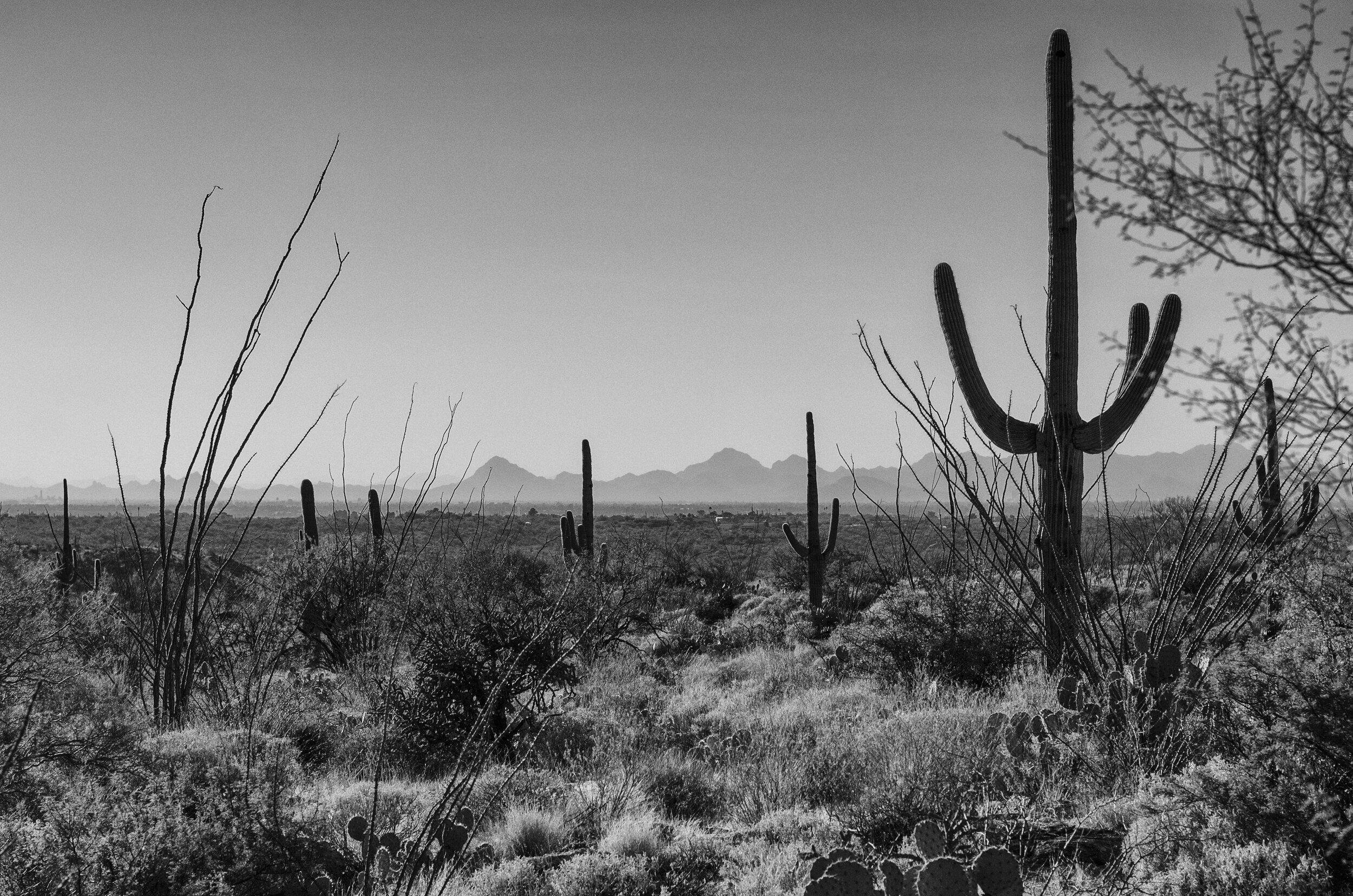 Arizona Land.jpg