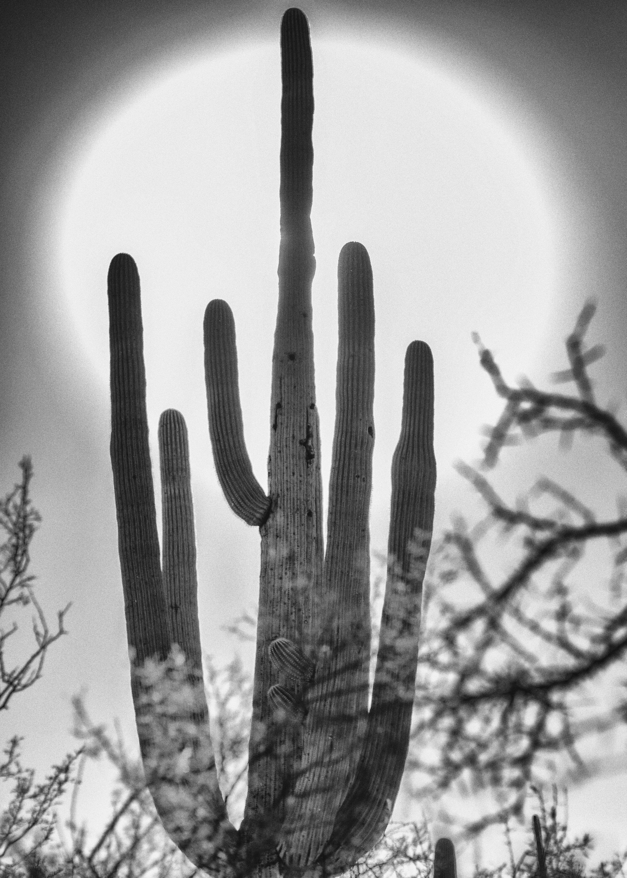 Cactis.jpg
