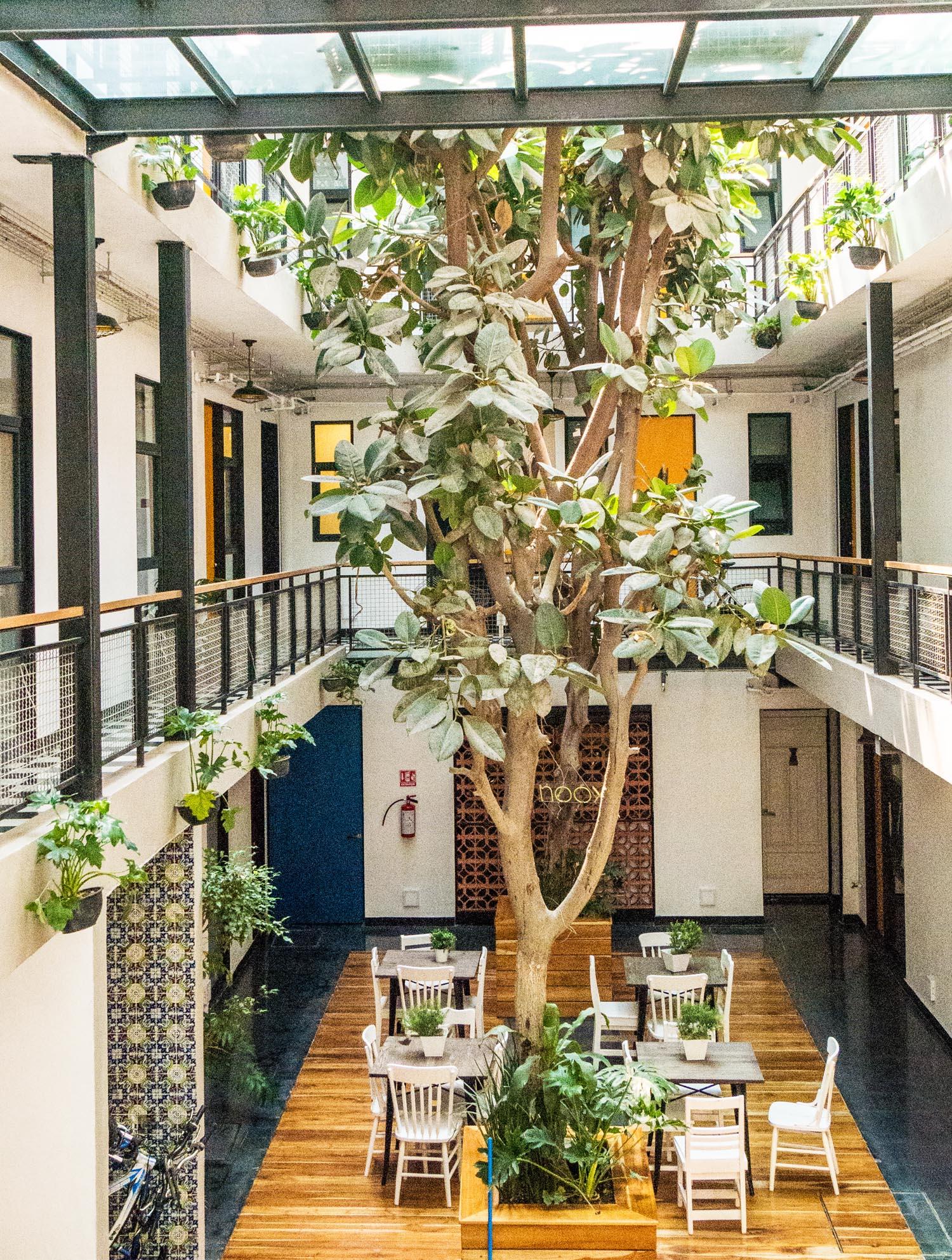 Mexico City Apartment Rentals