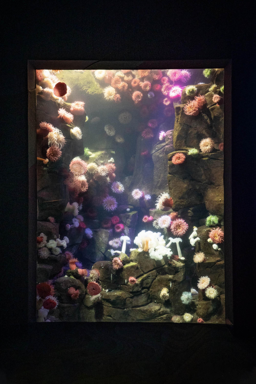 Toronto City Pass - Ripley's Aquarium